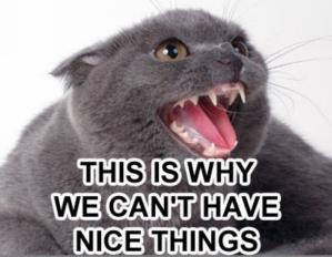 nicethingscat